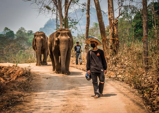 walking with Elephants - Chiang Mai Thailand