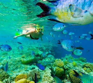 Great Barrier Reef Discovery