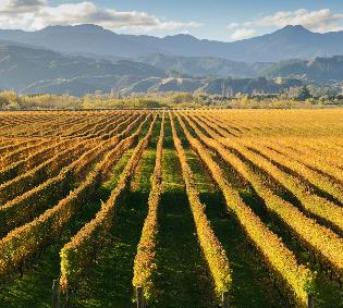 Marlborough Wine Country Cruise